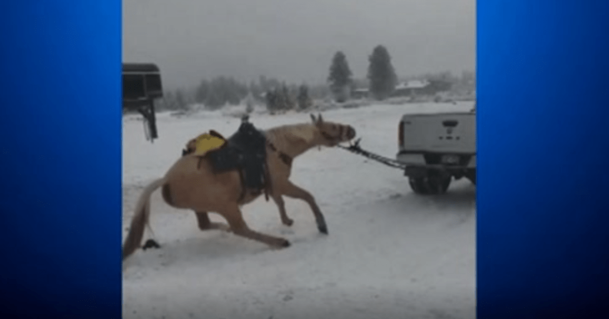 Political News: Horse dragged by truck: John and Amber Saldate arrested after video shows apparent animal abuse in Grand County, Colorado – CBS News
