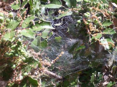 Creepy crawly spiders are little 8-legged creatures identified with insects and are regular in hot and dry conditions.