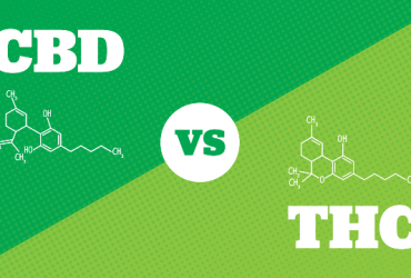 CBD vs THC: What's the Difference?