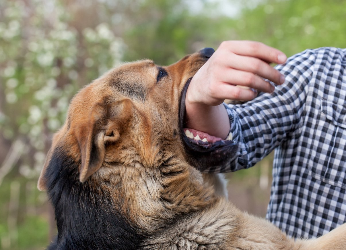 What Is Involved in a Dog Bite Lawsuit?