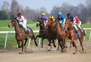 Horse Racing Fact Guide: What To Know Before You Go