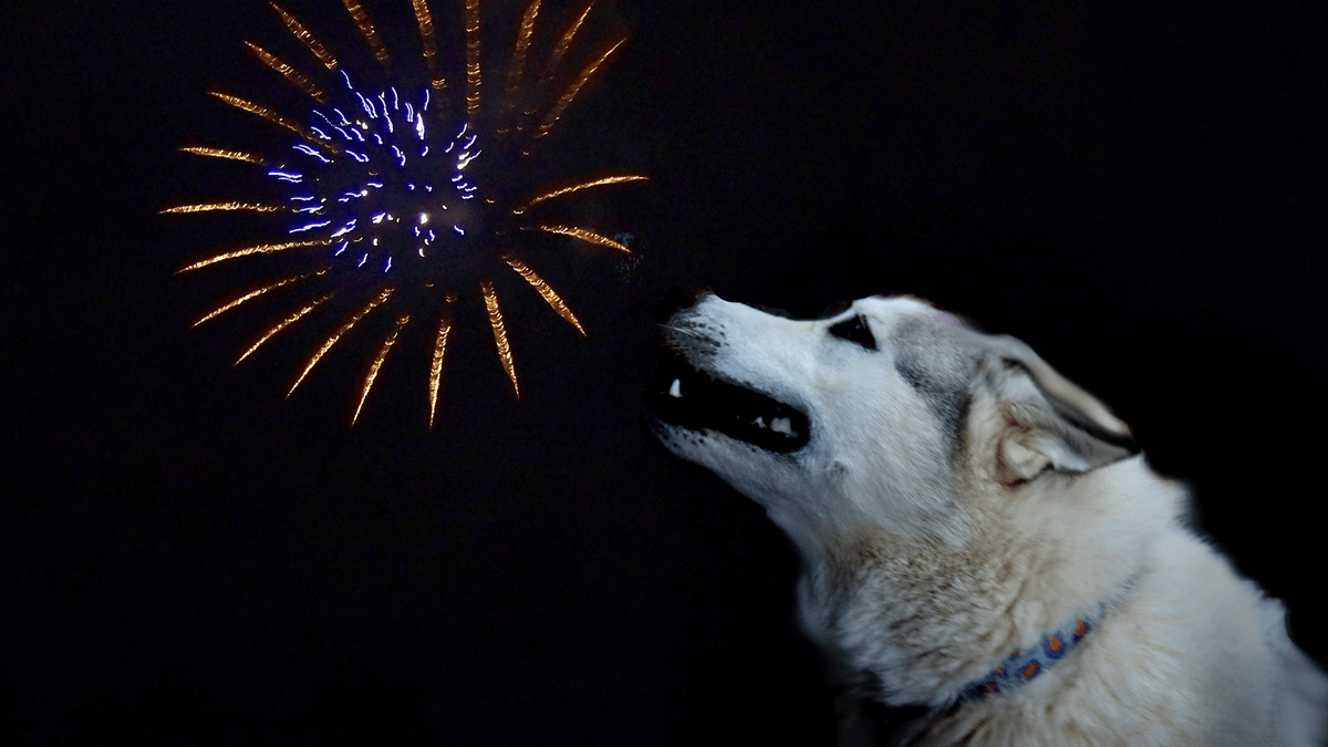 Dogs and Fireworks: How to Calm Your Dog's Fear