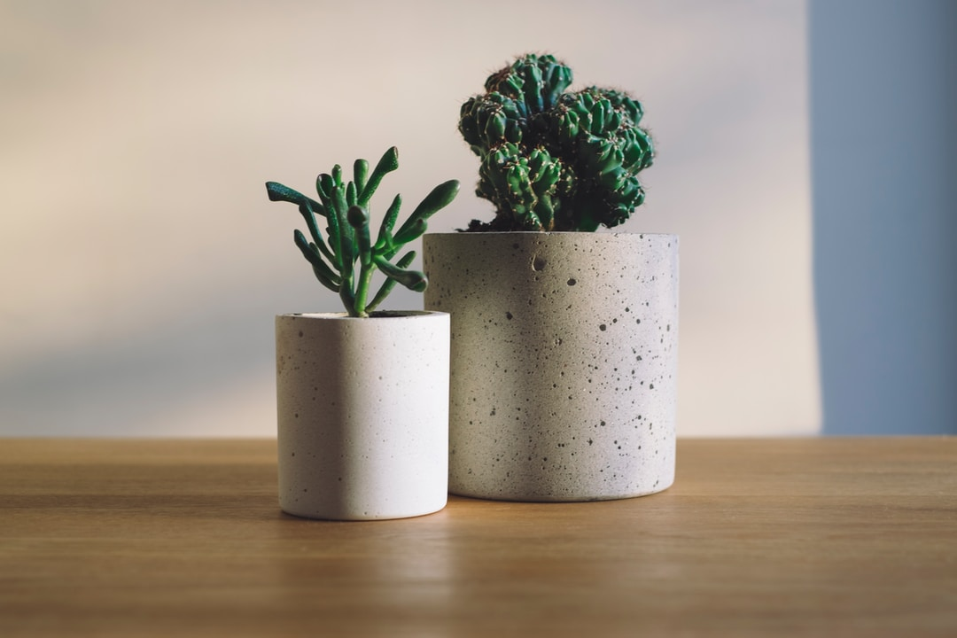 Store plants with care
