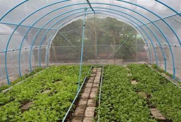Why Using a Grow Tent is the Best Choice for Your Needs