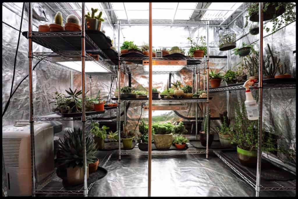 ● Creates a more personal experience: Growing indoors with grow tents provides you the unique opportunity to create something that is truly yours in every way. You're able to express yourself and have control of what goes into the tent or onto it because no one else will be around! This leads to greater satisfaction for you as an individual, which makes having a grow tent all the better reasons why using a grow tent is the best choice for your needs.