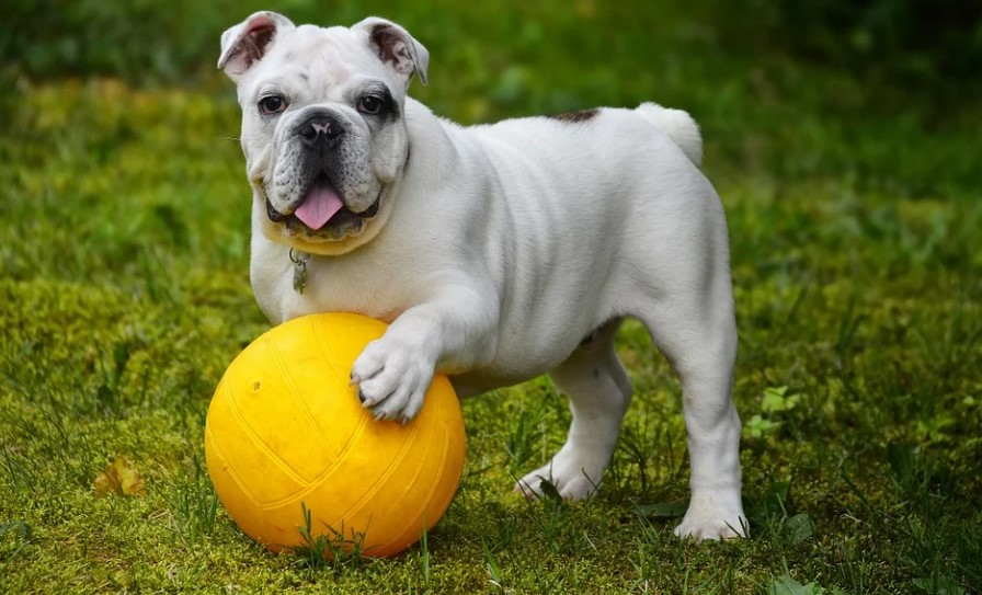 Pet Health: How to Keep Your Dog Happy and Healthy